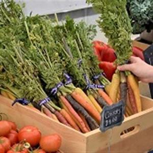 Carrots at Open-Air Market