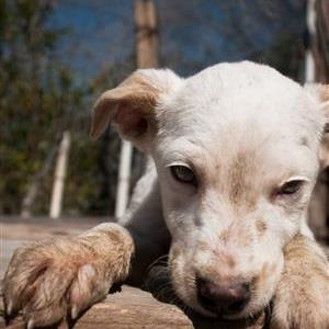 lorempixel dog.jpg
