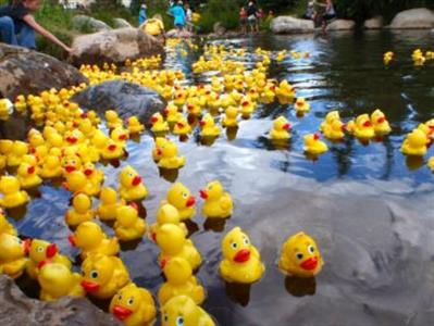 koto-duck-race-373x280.jpg